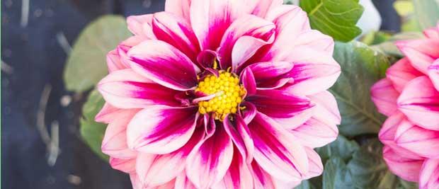 Gratis billede af blomst