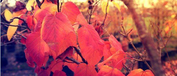 Gratis billede af efterår