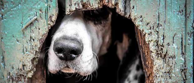 Gratis billede af hund