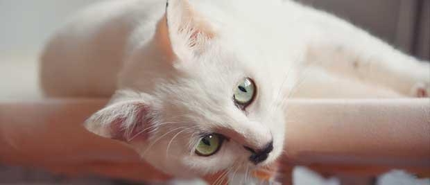 Gratis billede af en kat