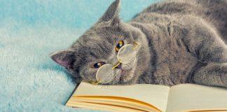 67 gratis ebøger som med garanti kan booste din online markedsføring