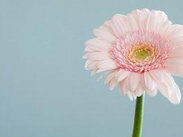 20 flotte WordPress-temaer med et minimalistisk hjemmeside design
